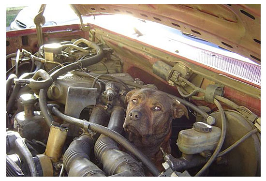 Well, Theres Your Problem Right There ... Insider Trading Rules  Don�t Apply To Congress dog in engine bay power 12729761335